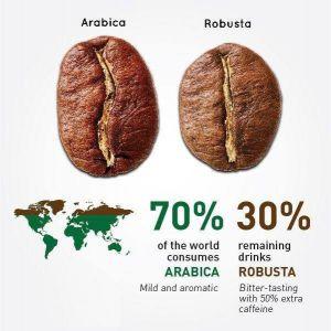 Чем отличается кофе арабика от робусты