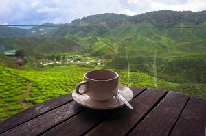 Можно ли кофе веганам